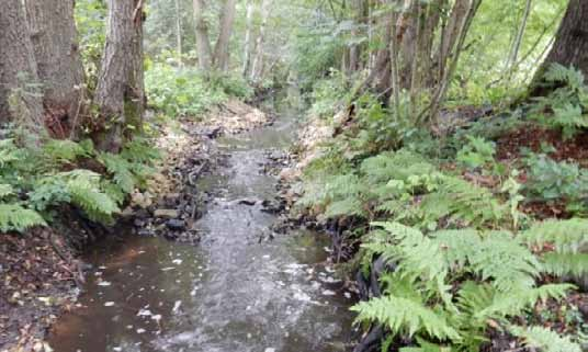 Thiener Mühlenbach – Durchgängigkeit