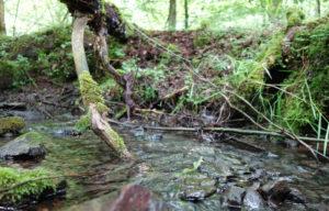 Hase-im-Fluss